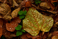 Fall Leaves and Water Droplets