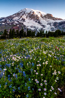 Mount Rainier and Paradise Wildflowers
